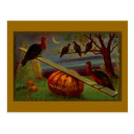 Turkeys Seesaw on Pumpkin Vintage Thanksgiving Postcard