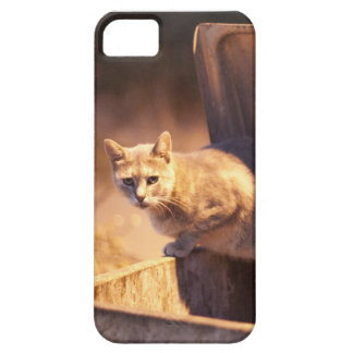 Turkish Cat iPhone 5 case