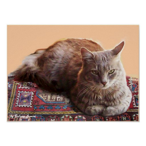 TURKISH CAT ON THE OLD CARPET POSTERS