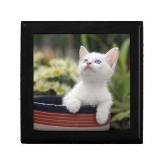 Turkish White Kitten Gift Box