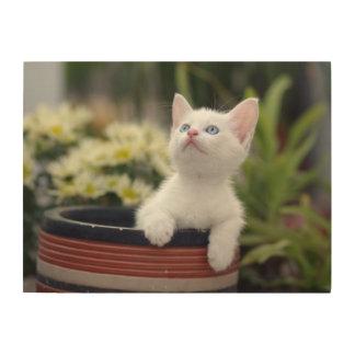 Turkish White Kitten Wood Print