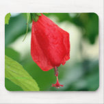 Turks Cap Red Flower Mouse Pad
