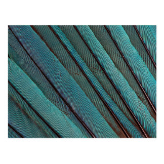 Turquoise Kingfisher Feather Design Postcard