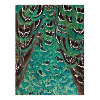 Turquoise Pheasant Feather Detail Postcard