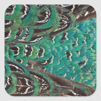 Turquoise Pheasant Feather Detail Square Sticker