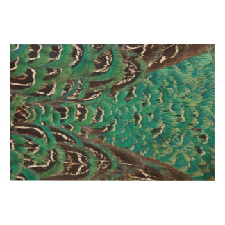 Turquoise Pheasant Feather Detail Wood Wall Art