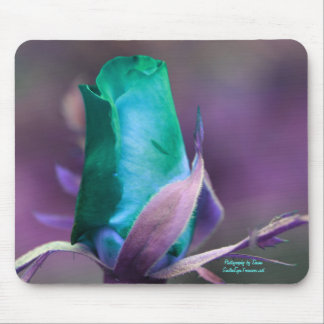 Turquoise Rosebud Flower Photography Mousepad