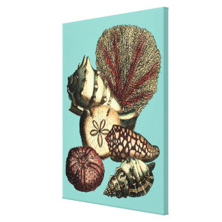 Turquoise Shell and Red Coral Collection Canvas Print