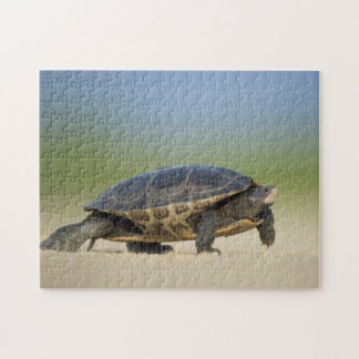 Turtle / Amphibian / Reptile Closeup Photo Puzzle