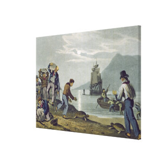 Turtle Catching on Land, engraved by Matthew Dubou Canvas Print