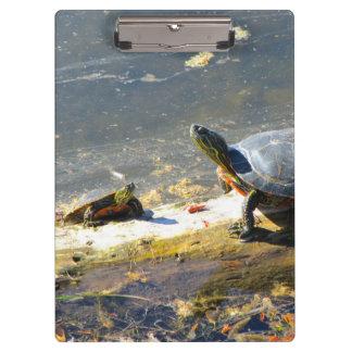 Turtle Clipboard