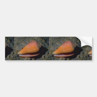 Turtle cone (Conus testudinarius) Shell Bumper Sticker