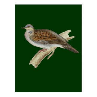 Turtle Dove Postcard