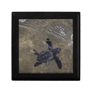 Turtle hatchlings 2 gift box