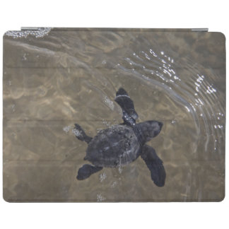 Turtle hatchlings 2 iPad cover