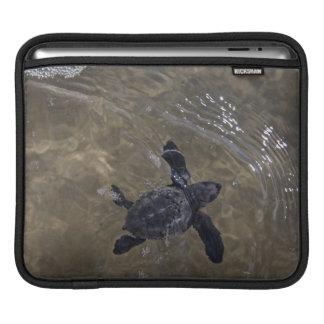 Turtle hatchlings 2 iPad sleeve