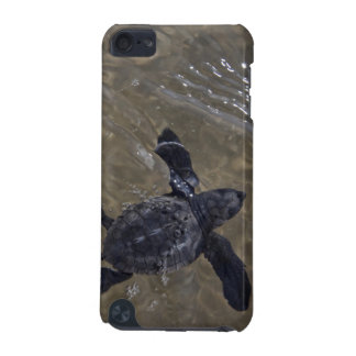 Turtle hatchlings 2 iPod touch 5G covers