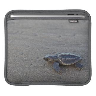 Turtle hatchlings iPad sleeve