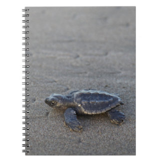 Turtle hatchlings notebooks