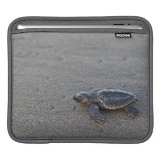 Turtle hatchlings sleeves for iPads