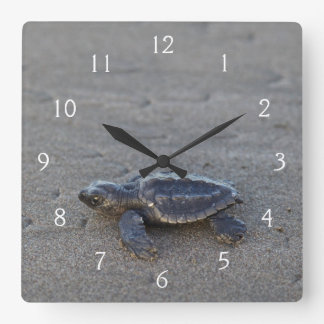 Turtle hatchlings square wall clock