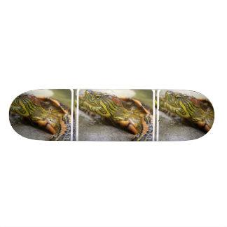 Turtle Identification Skateboard