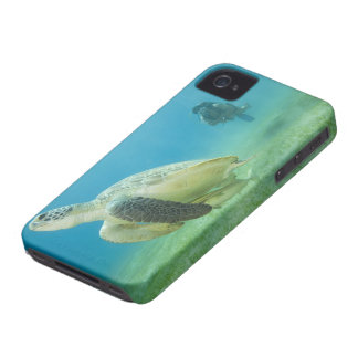 Turtle iPhone 4 Cover