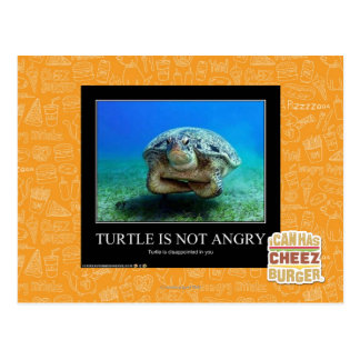 Turtle Is Not Angry Postcard