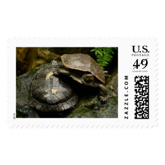 Turtle Large Postage Stamps