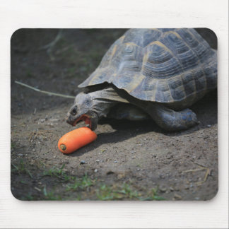 Turtle Lunch Mouse Mat