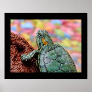 Turtle Macro Animal Christmas Contemporary Modern Poster