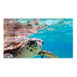 Turtle Pack Of Standard Business Cards