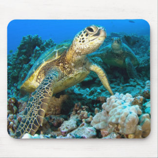 Turtle Pair Mouse Pads