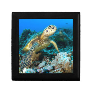 Turtle Pair Small Square Gift Box
