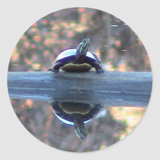 Turtle Reflections Sticker
