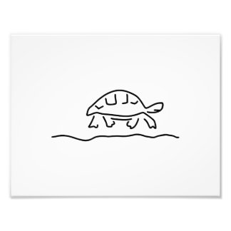 turtle reptiles tanks photo