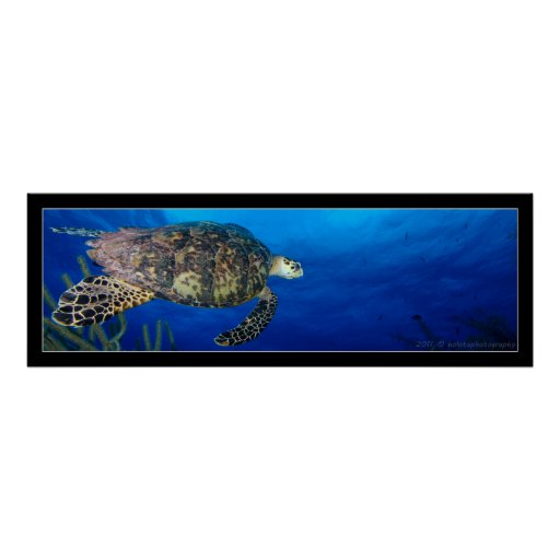Turtle Seascape Poster