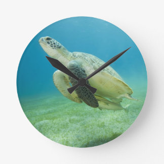 Turtle Wall Clocks