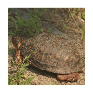 Turtle, Wood Photo Print. Wood Wall Art