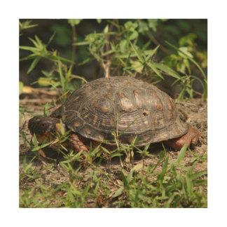 Turtle, Wood Photo Print. Wood Wall Decor