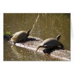 Turtles Greeting Cards