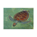 Turtles on Canvas Stretched Canvas Print