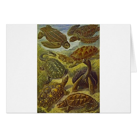 Turtles Scientific Print Card