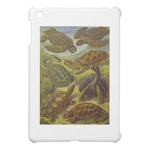 Turtles Scientific Print Cover For The iPad Mini