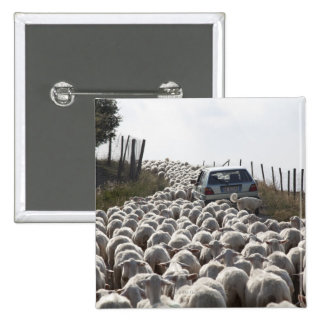 tuscany farmland road, car blocked by herd of 15 cm square badge