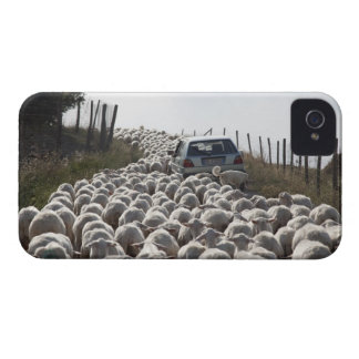 tuscany farmland road, car blocked by herd of Case-Mate iPhone 4 cases