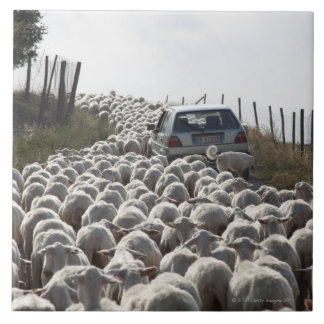 tuscany farmland road, car blocked by herd of large square tile