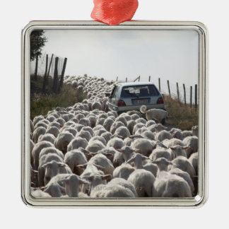 tuscany farmland road, car blocked by herd of Silver-Colored square decoration