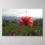 Tuscany Poppy Print