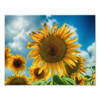Tuscany Sunflowers Photo Print